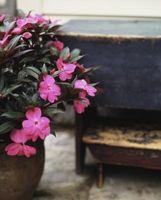 Nom botanique des Fleurs