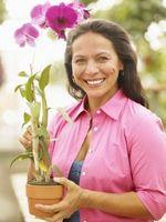 Comment Coupez Morte Orchid Roots
