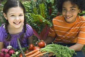 Les meilleures saisons de plantation pour les légumes
