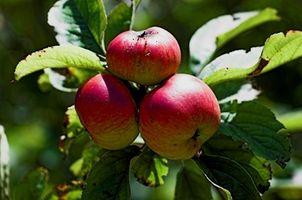 Comment Préparez arbres fruitiers Bancs