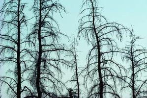 Comment Dig Out un arbre mort