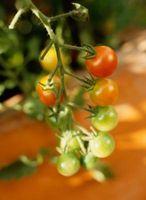 Le diamètre de la cage appropriée pour la culture des tomates