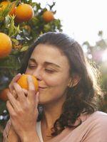 Puis-je faire pousser des arbres orange dans ma pelouse?