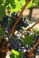 Indications pour construire une Grape Arbor