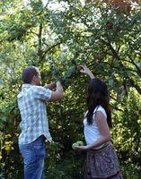 Arbres fruitiers pour les zones 3 et 4
