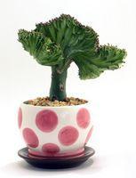 Comment planter directement dans un pot en céramique