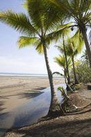 Espèces de plantes tropicales