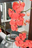 Types de Red Orchids