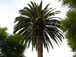 Comment puis-je faire un faux Palm extérieure Tree?