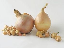 Instructions pour Sets plantation d'oignons