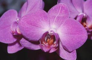 Comment identifier Blanches fleurs sauvages ou Orchidées dans le Massachusetts