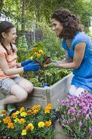 Les plantes à fleurs pour Juillet au Texas