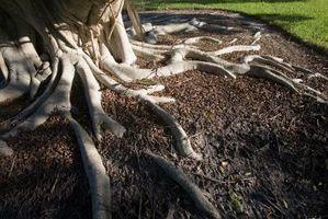 comment tuer les racines des arbres nontoxically. Black Bedroom Furniture Sets. Home Design Ideas