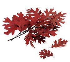 Comment tailler un Scarlet Oak Tree