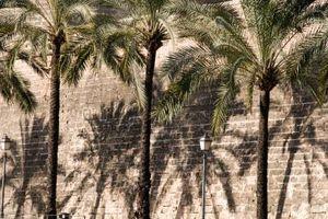 Engrais utilisés pour les arbres nouvellement plantés Palm