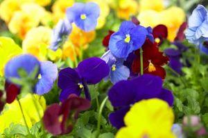 Que faire si Pensées arrêt Blooming
