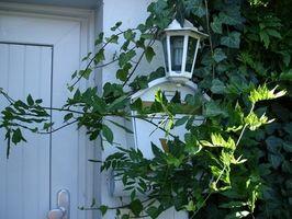 Bonnes plantes pour une boîte aux lettres et le Soleil