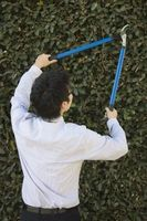 Comment tailler une Mop Cedar Tree