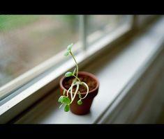 Plantes d'appartement nocifs