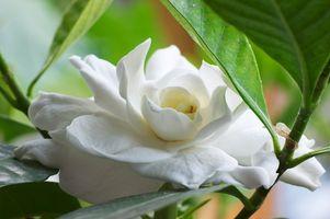 Maison des engrais pour plantes Gardenia