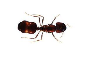 Comment se débarrasser des fourmis dans un réfrigérateur