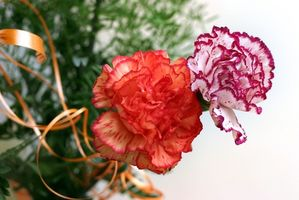 Comment teindre Fleurs Utilisation de colorant alimentaire