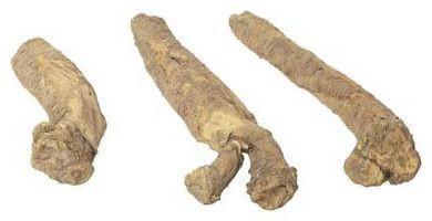 Comment tailler les feuilles de manioc pour augmenter le rendement
