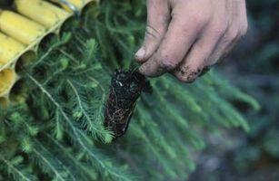 Pépinière Guide Espacement des plantes
