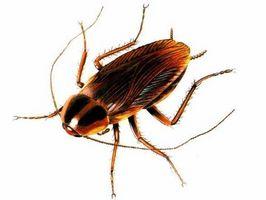 Comment faire Roach Vaporisateur