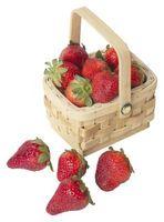 Combien de temps faut-il pour cultiver des fraises hydroponique?