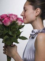 Comment conserver les fleurs fraîchement coupées dans un vase