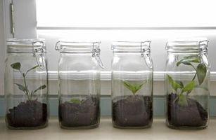 Comment faire pour démarrer frênes De semences