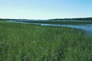 Les types de plantes des prairies