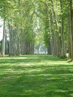 Arbre Wrap pour arbres endommagés