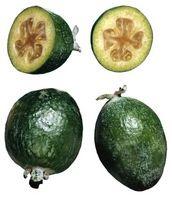 Comment greffer les arbres Guava
