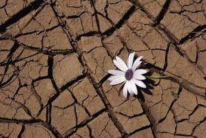 Plantes qui vivent dans chaleur sèche