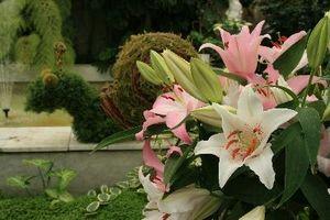 Quels types de sol avez Journée lys et des iris cultivons le meilleur?
