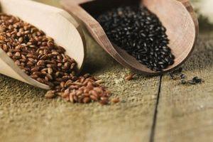 Bean Seed Germination information