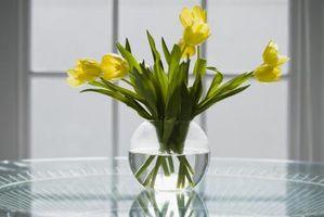 Can I Dig Up Tulip & jacinthe ampoules Avant le feuillage meurt Retour?