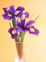 Types de Perfect Fleurs