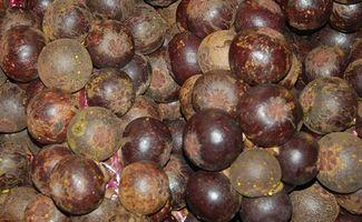 Comment Propager mangoustan