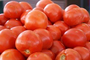Chlorure de calcium Utilise sur les tomates
