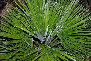 Liste des plantes protégées en Floride