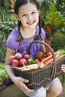 Liste des légumes et où ils vont grandir