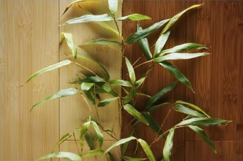 Comment prendre soin de bambou usine