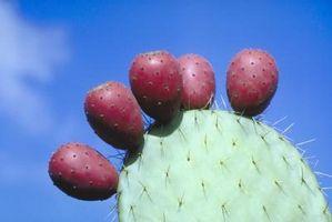 Les signes de dommages à Succulentes