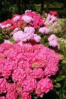 Shade plantes aimant de couverture