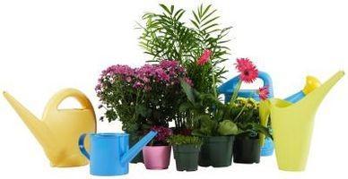 Noms communs pour plantes d'intérieur