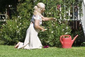 Poison Jardin Fleurs