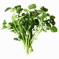 Liste des plantes aquatiques comestibles